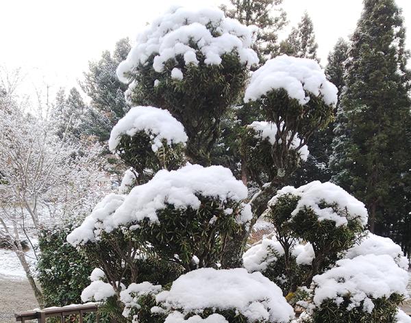 春の雪2.jpg